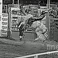 Ride 'em Cowboy by Shawn Naranjo