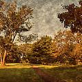 Ridge Walk - Holmdel Park by Angie Tirado
