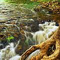 River rapids Print by Elena Elisseeva