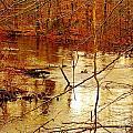 River Russel by Lisa  Ridgeway