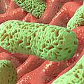 Rod-shaped Bacteria, Artwork by David Mack