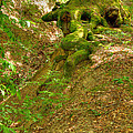 Roots Of A Tree At Ciucaru Mare Forest by Gabriela Insuratelu