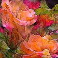 Rose 146 by Pamela Cooper