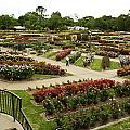 Rose Garden Park Tyler Texas by M K  Miller