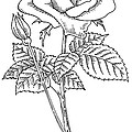 Rose, Lino Print by Gary Hincks