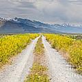 Ruby Mountains Wildflower Road by Sheri Van Wert