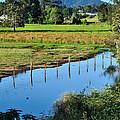 Rural Landscape After Rain by Kaye Menner