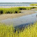 Salt Marsh Habitat With Flock Of Birds by Tim Laman