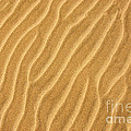 Sand Ripples Abstract by Elena Elisseeva