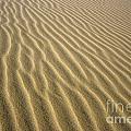Sandhills by MotHaiBaPhoto Prints
