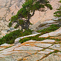 Schoodic Cliffs by Brent L Ander