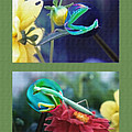 Science Class Diptych 2 - Praying Mantis by Steve Ohlsen