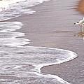 Sea Gull Reflection by Cindy Lee Longhini