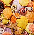 Sea Horse Starfish And Seashells  by Garry Gay