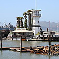 Sea Lions At Pier 39 San Francisco California . 7d14294 by Wingsdomain Art and Photography