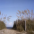 Sea Oats Line The Path by Taylor S. Kennedy