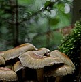 Sea Of Heads by Odd Jeppesen