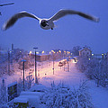Seagull At Winter by Nafets Nuarb