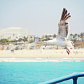 Seagull Flying by Libertad Leal Photography