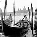 Seagull From Venice - Venezia by Bronco - J. Heiligensetzer