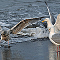 Seagull Treasures by Debra  Miller