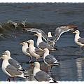 Seagulls Gathering by Debra  Miller