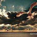 seagulls in a grunge style Print by Meirion Matthias