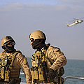 Seals Aboard A Rigid-hull Inflatable by Stocktrek Images