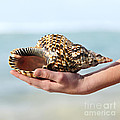 Seashell In Hand by Elena Elisseeva