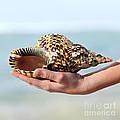 Seashell in hand Print by Elena Elisseeva
