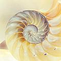 Seashell. Light Version by Jenny Rainbow