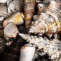 Seashells by Hakon Soreide