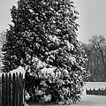 Season Of White by Steven Ainsworth