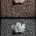 Seasons of Change Print by Luke Moore