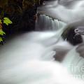 Seasons Rush By by Mike  Dawson