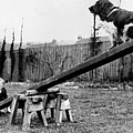 See-saw Dog by Fox Photos