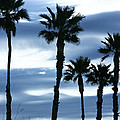 Seven Palms by Gilbert Artiaga