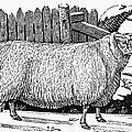 Sheep, 1788 by Granger