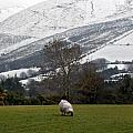Sheep grazing atThe Galtees  Ireland's tallest inland mountains Print by Pierre Leclerc Photography
