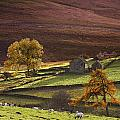 Sheep On A Hill, North Yorkshire by John Short