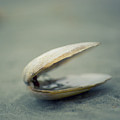 Shell by Jill Ferry Photography