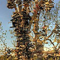 Shoe Tree by Lori Kimbel