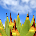 Side View Of Cactus On Blue Sky by Greg Adams Photography