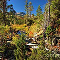 Sierra Nevada Fall Beauty At Lily Lake by Scott McGuire