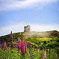 Signal Hill In St. John's Newfoundland by Elena Elisseeva
