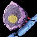 Simian Immunodeficiency Virus (siv) by Sriram Subramaniamnational Cancer Institute