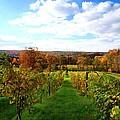 Six Miles Creek Vineyard by Paul Ge