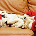 Six Puppies Sleep On Sofa, Some Wear Santa Hats by Karina Santos