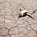Skull in Desert 2 Print by Kelley King