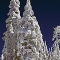 Snow-covered Pine Trees On Mount Hood by Natural Selection Craig Tuttle